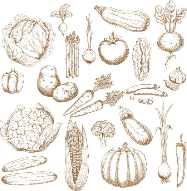 organisch gesundem gemüse retro-skizzen - kartoffeln stock-grafiken, -clipart, -cartoons und -symbole
