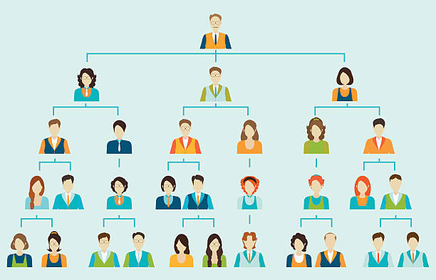 Organizational chart corporate business hierarchy. Organizational chart corporate business hierarchy ,people structure, character cartoon business people conceptual vector illustration. organization chart stock illustrations