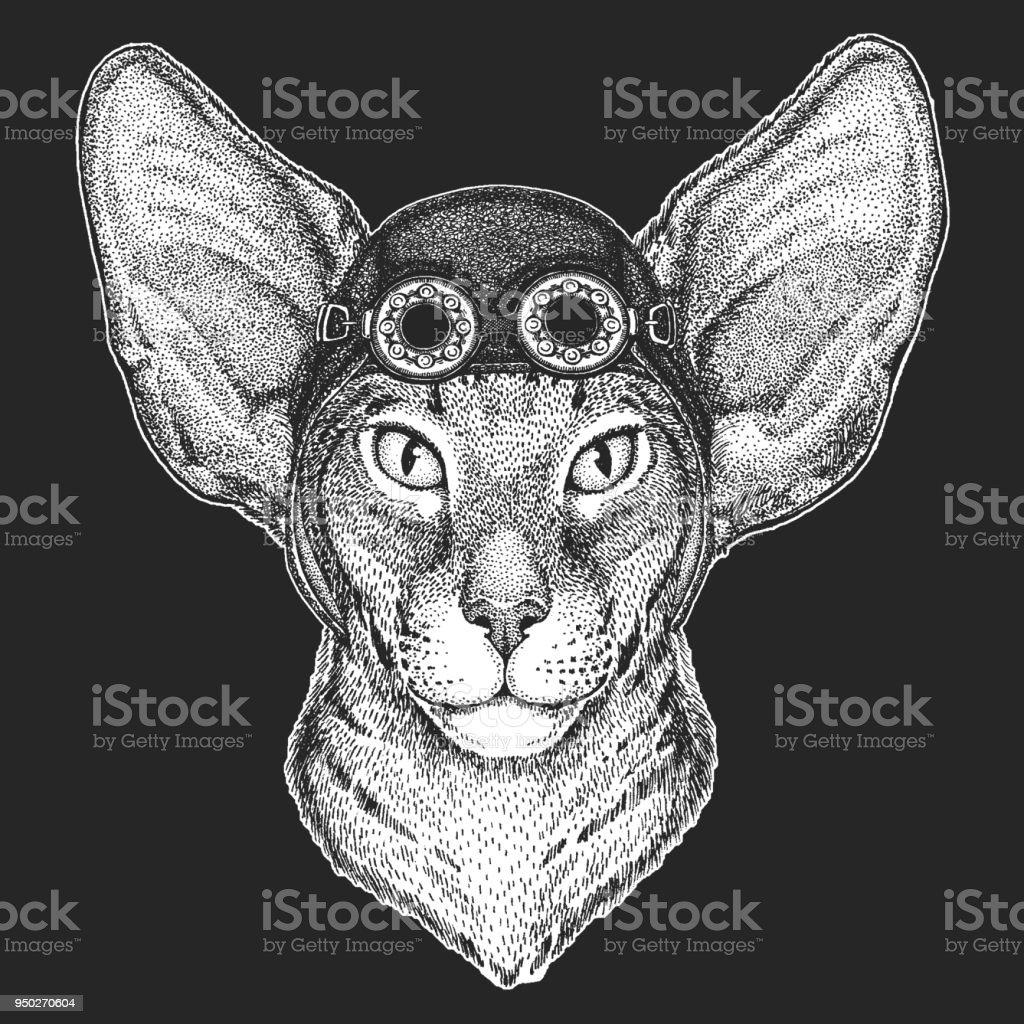 Chat Oriental Avec De Grandes Oreilles Main Dessinée Image Pour