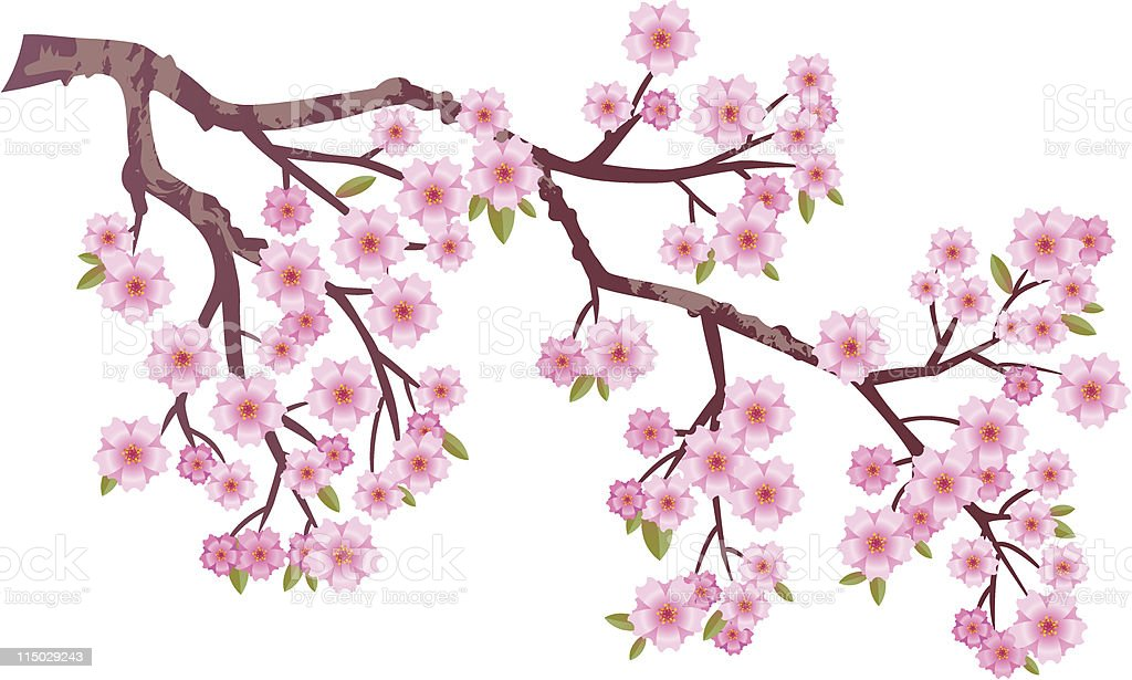 Oriental cherry vector art illustration