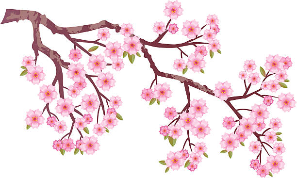 Royalty Free Japanese Cherry Blossoms Clip Art, Vector ...