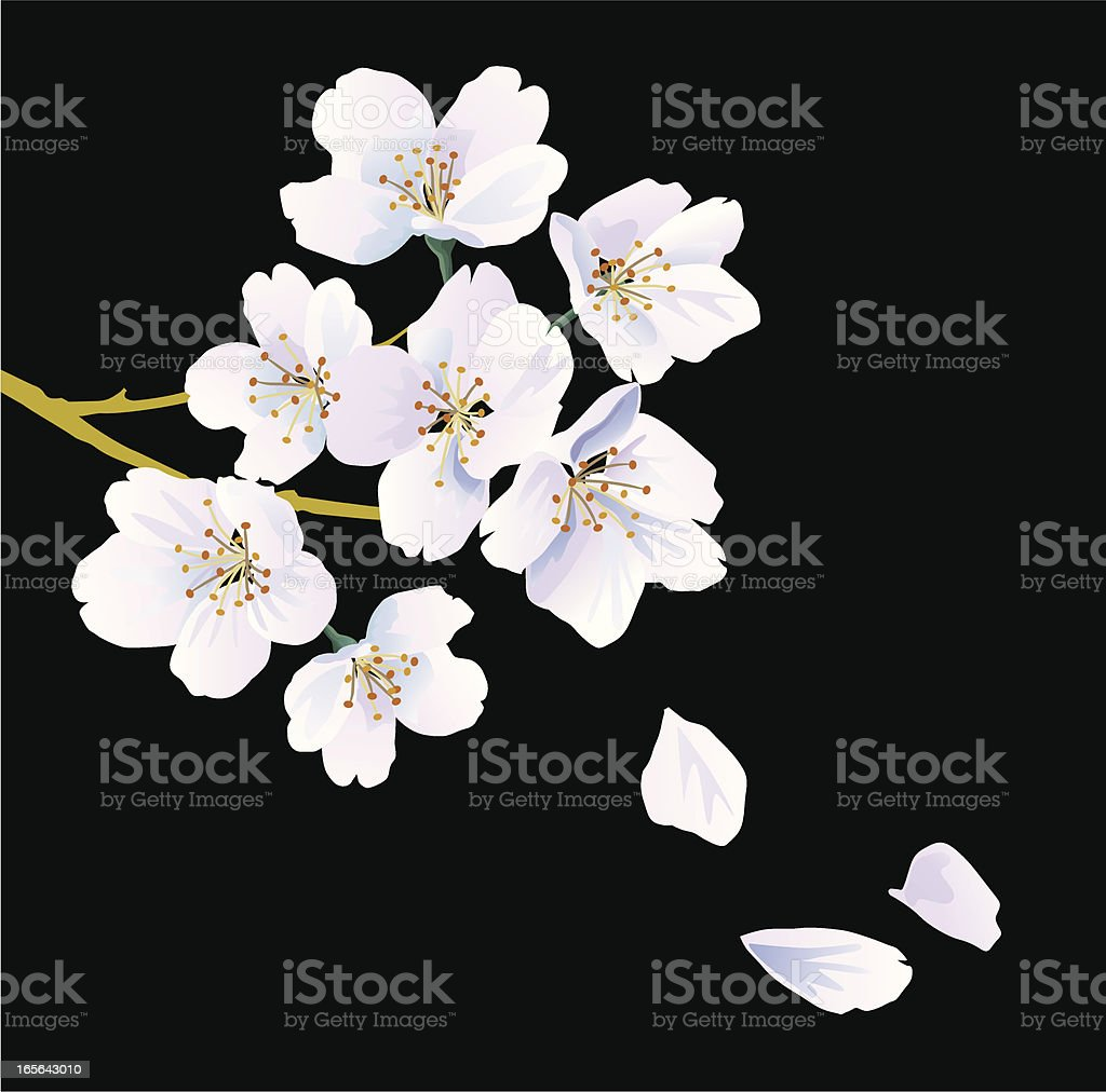 Oriental cherry royalty-free stock vector art