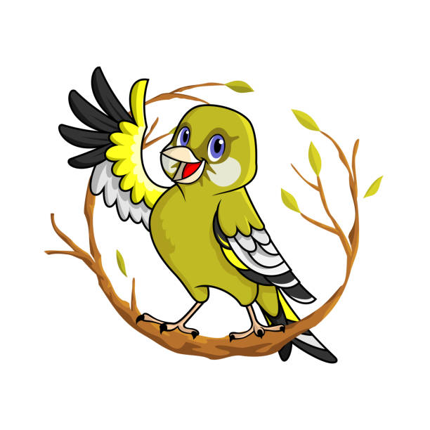 Oriental Greenfinch vector art illustration