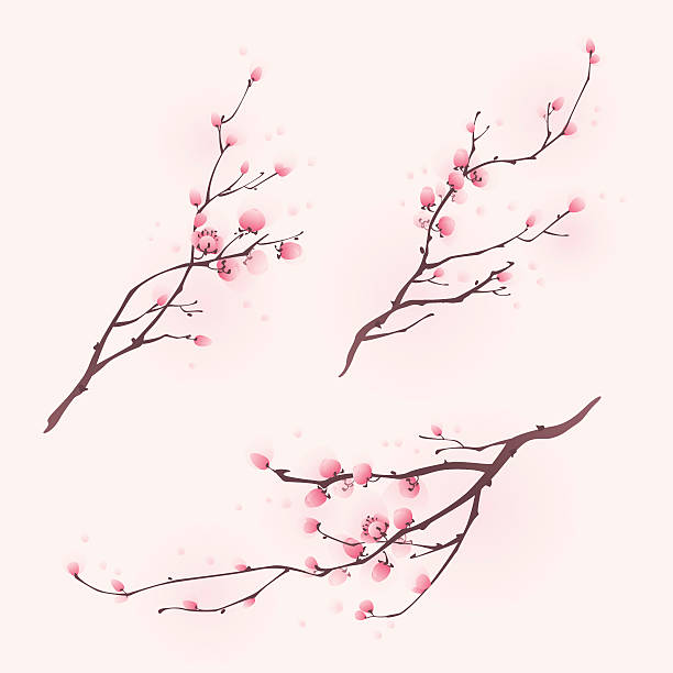 Oriental style painting, cherry blossom in spring  plum blossom stock illustrations