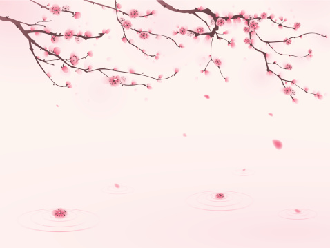 Oriental Style Painting Cherry Blossom In Spring Stock Illustration - Download Image Now