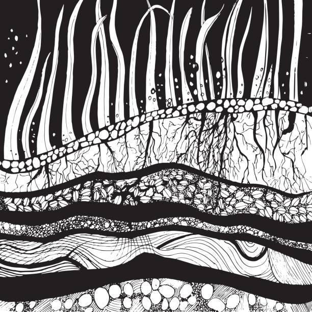 Original Zeichnung, Grafik, Querschnitt des Bodens mit Gräser, Wurzeln und Samen. Vektor – Vektorgrafik