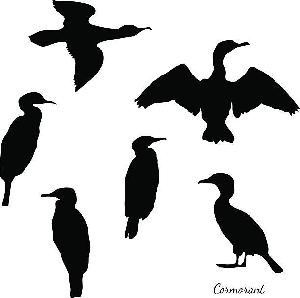 Сormorant bird. Set of black isolated vector silhouettes of birds cormorant).  lakeshore stock illustrations