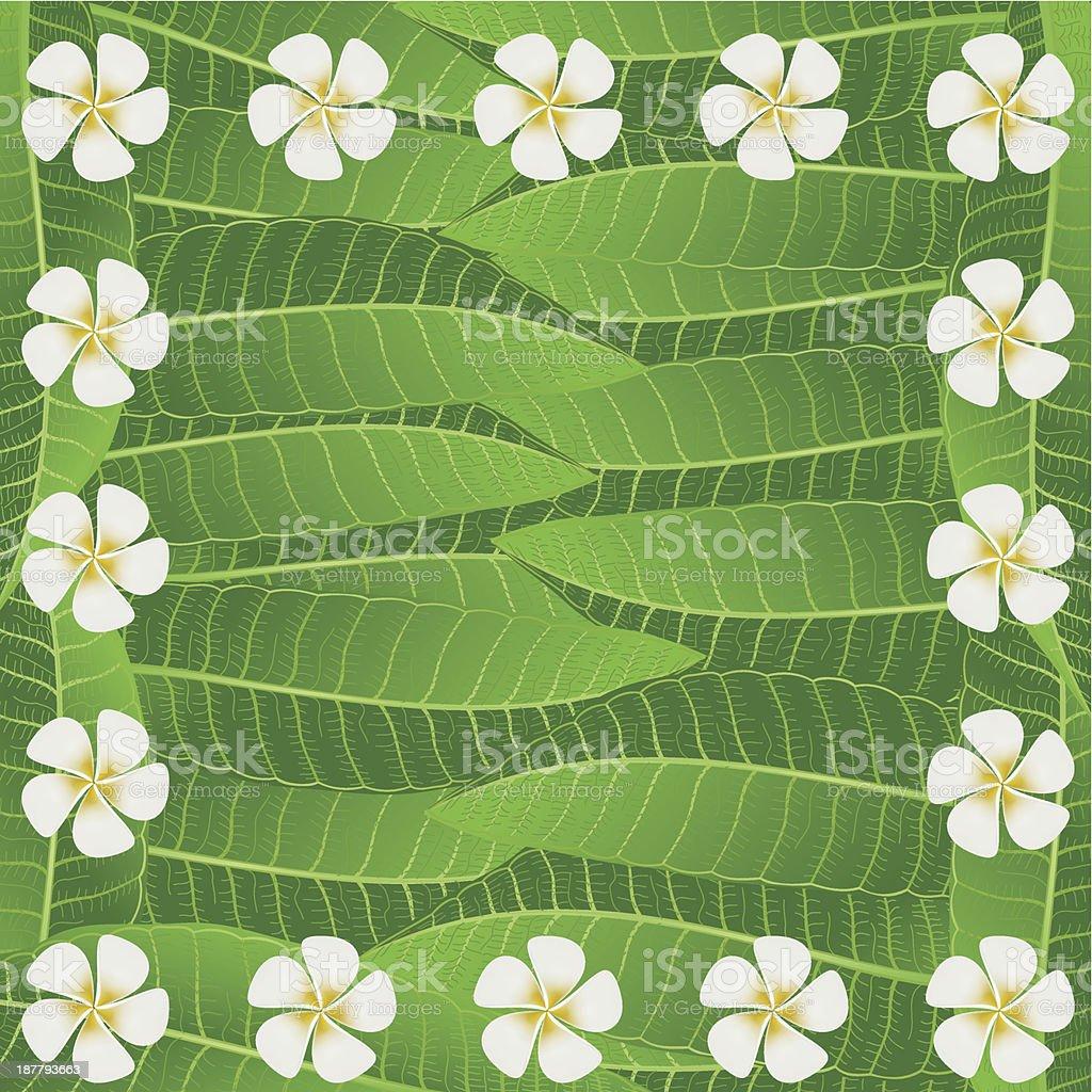 Ornament Of Frangipani Flowers & Leaves royalty-free stock vector art