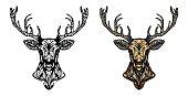 Ornamented deer hand drawn vector illustration. Ethnic animal vector