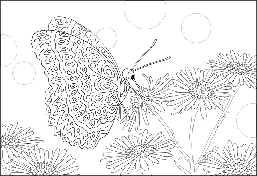 Ornate butterfly drinking flower nectar