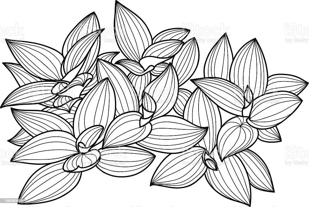 Ornate ludisia in line art style, black and white