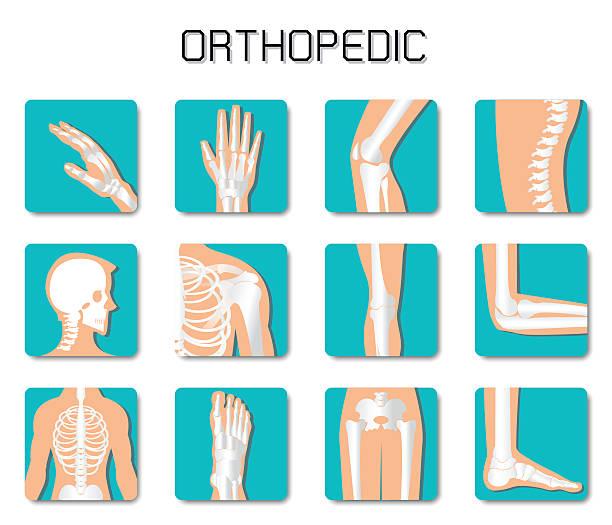 Orthopedic and spine icon set on white background. Orthopedic and spine icon set on white background, bone x-ray image of human joints, anatomy skeleton flat design vector illustration. human jaw bone stock illustrations