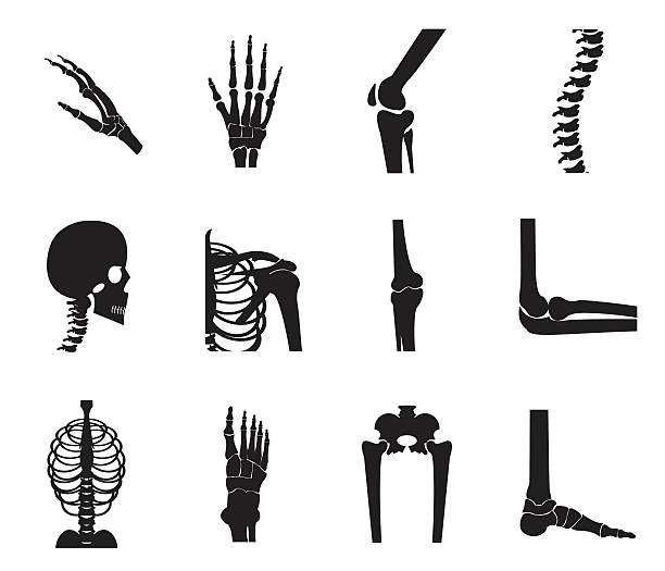 Orthopedic and spine icon set on white background Orthopedic and spine icon set on white background, bone x-ray image of human joints, anatomy skeleton flat design vector illustration. human jaw bone stock illustrations