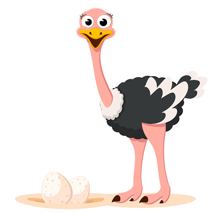 Ostrich and nest with eggs. The character