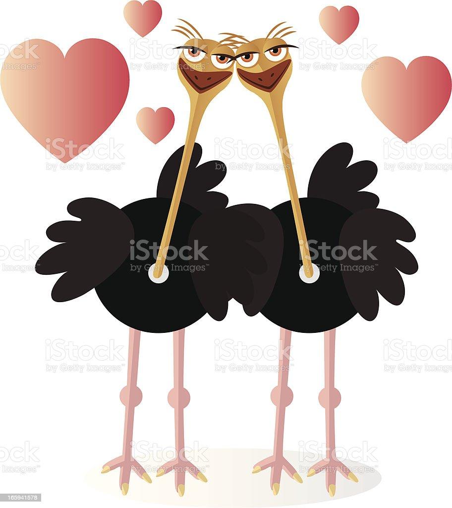 Autruche amour - Illustration vectorielle