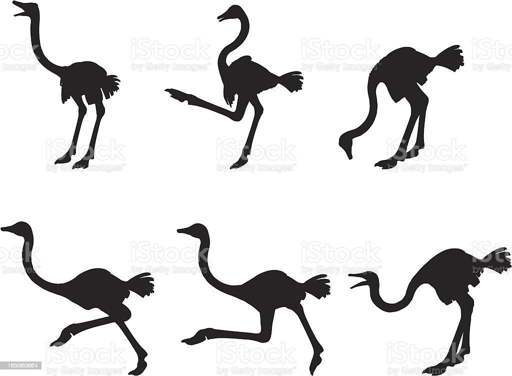 Silhueta de avestruz - ilustração de arte em vetor