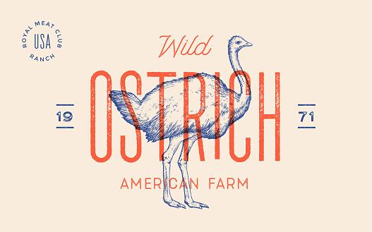 Ostrich. Template Label. Vintage retro print