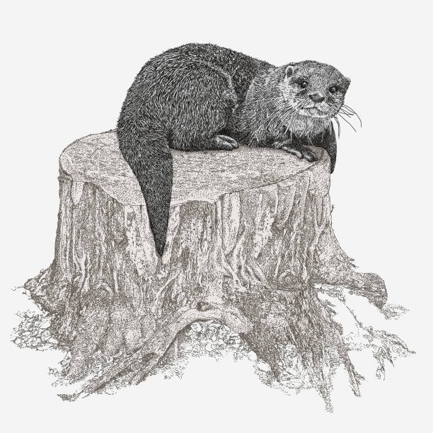 otter sitting on tree stump - otter stock illustrations, clip art, cartoons, & icons