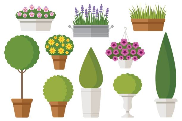 Outdoor potted plants Vector set of outdoor potted plants: bushes, trees, flowers. Isolated on white. Flat style. lavender plant stock illustrations