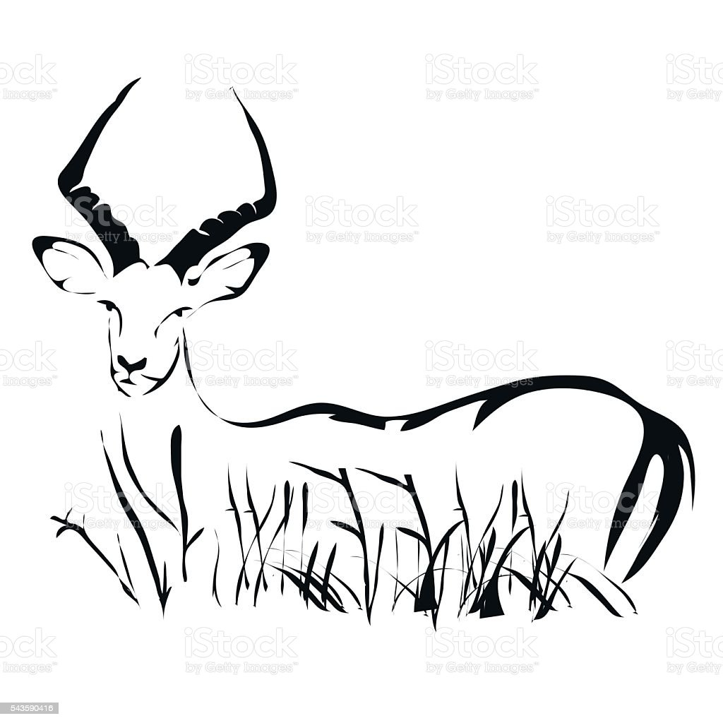 Outline Antelope Impala Vector Image Can Be Use For Logo ...