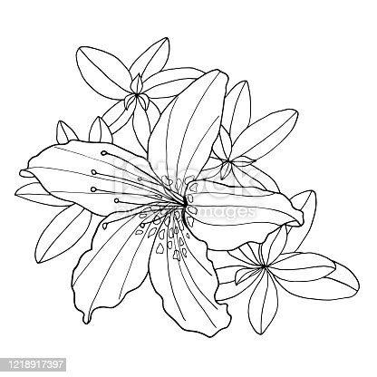 Outline decorative Rhododendron flower and leaves. Coloring book vector illustration. Botanical hand drawn black and white contour monochrome illustration for coloring page, greeting card, invitation, print design, textile