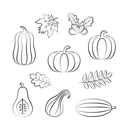 Outline drawing of pumpkins and autumn leaves