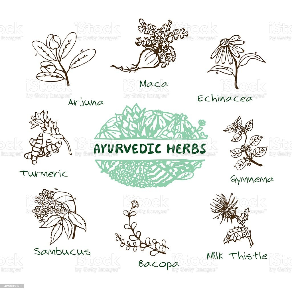 Outline drawings of a selection of Ayurvedic herbs vector art illustration