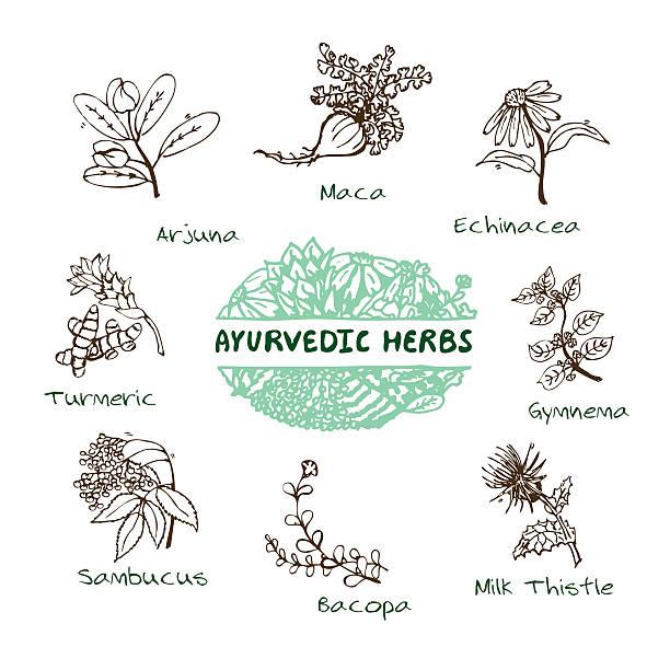 Ayurvedische Kräuter-Kollektion – Vektorgrafik