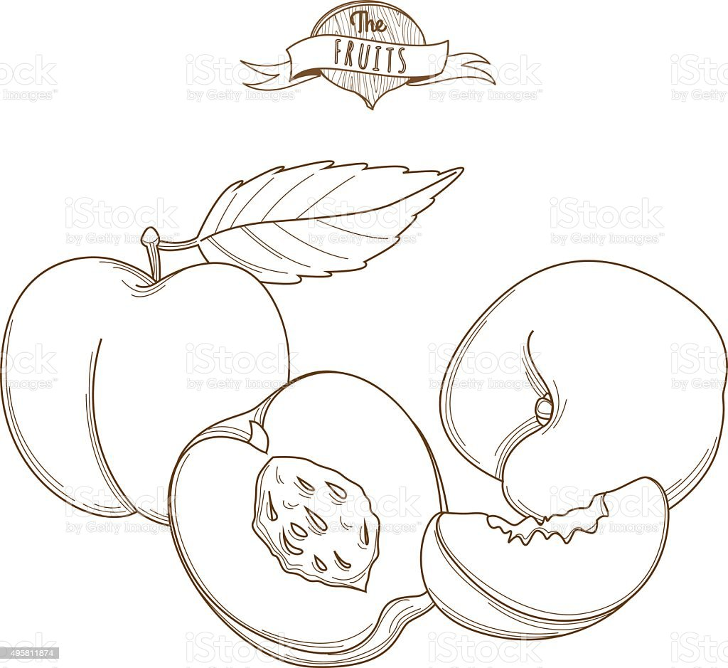 Outline hand drawn peach (flat style, thin line). vector art illustration