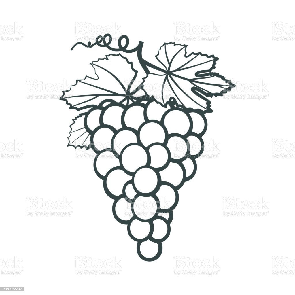Outline Icon Of Bunches In Grapes With Leaves Stock Illustration Download Image Now Istock