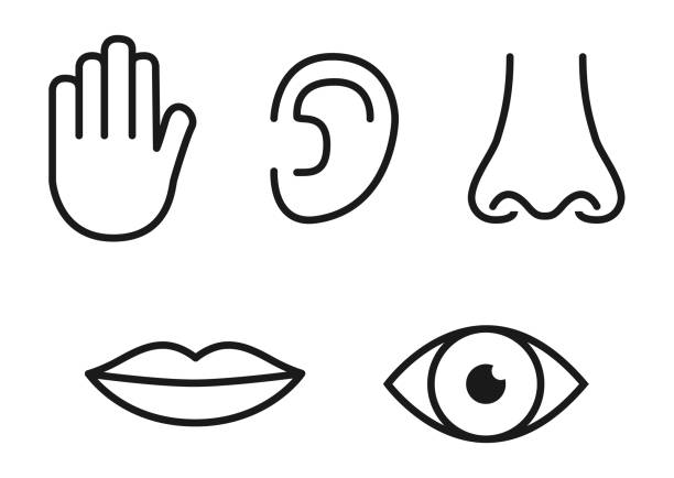 Outline icon set of five human senses: vision (eye), smell (nose), hearing (ear), touch (hand), taste (mouth with tongue) Outline icon set of five human senses: vision (eye), smell (nose), hearing (ear), touch (hand), taste (mouth with tongue). sensory perception stock illustrations