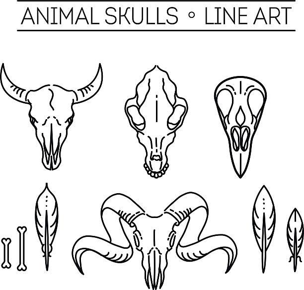 outline icon skull animals - animal skull stock illustrations