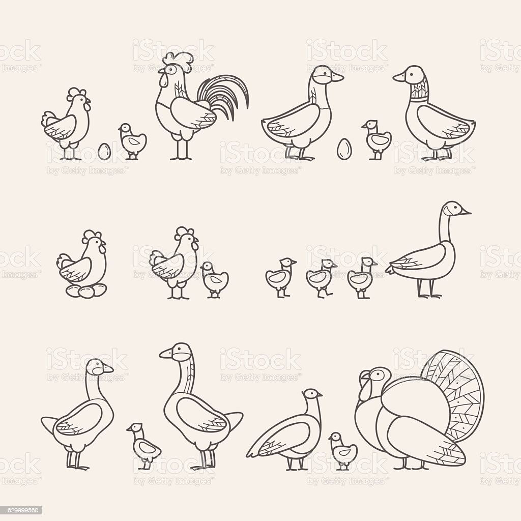 Outline Icons Set - Poultry - Illustration vectorielle
