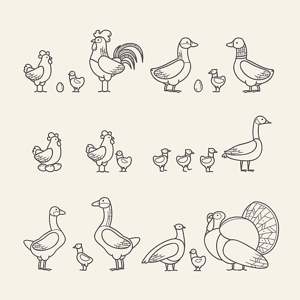 Outline Icons Set - Poultry Collection of Bird Icons canada goose stock illustrations