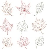 Outline leaf design elements.  Hi res jpeg included. Scroll down to see more of my illustrations.