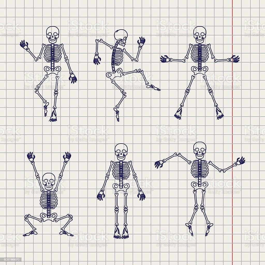 Outline skeletons set on notebook page vector art illustration