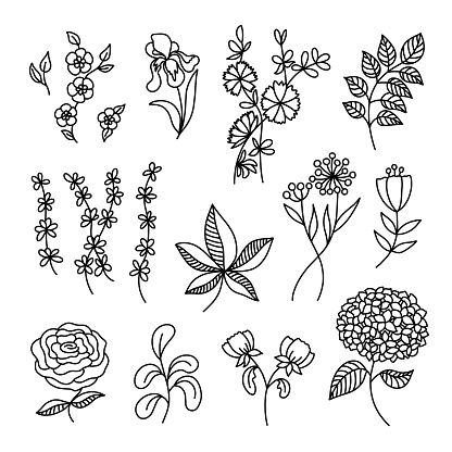 Outline vector Spring Flowers and Leaves doodles set. Hand drawn Garden Plants. Floral design elements collection. Coloring page