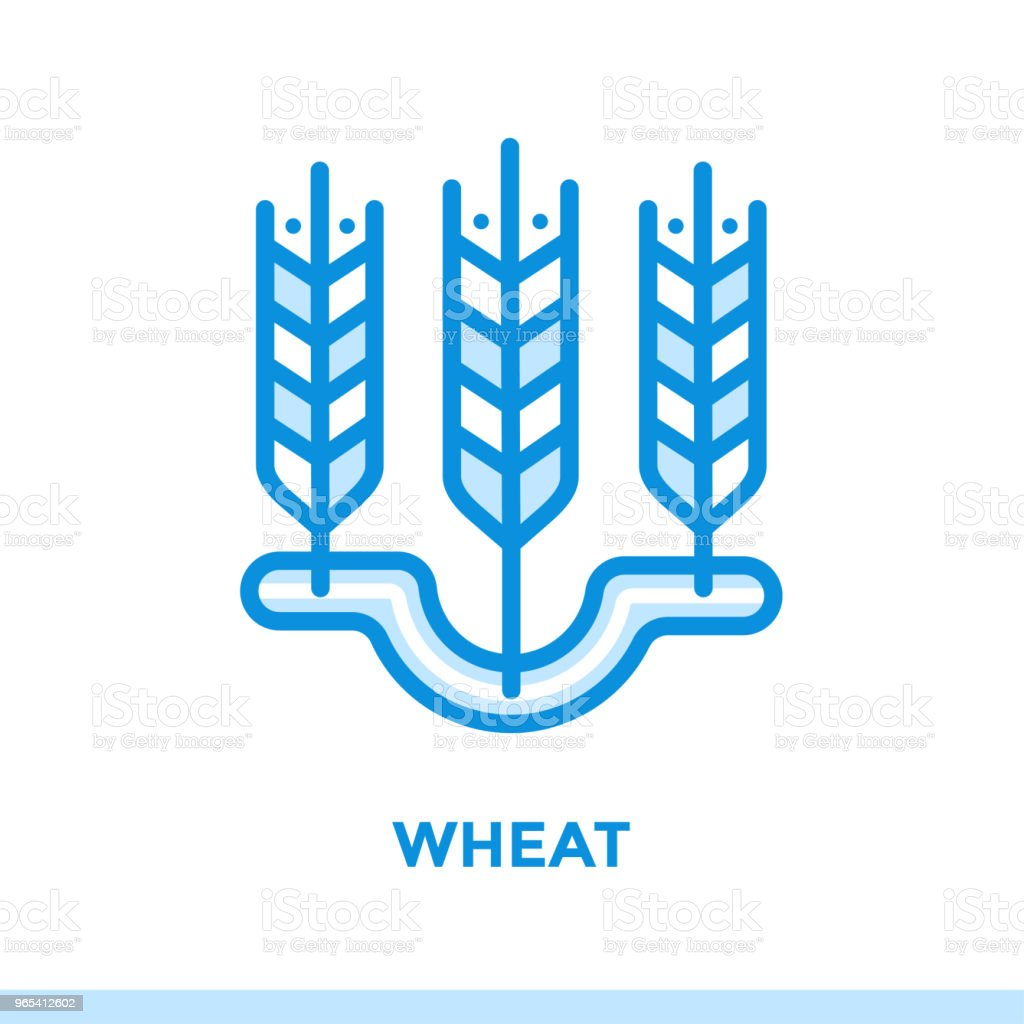 Outline WHEAT icon. Vector pictogram suitable for print, website and presentation royalty-free outline wheat icon vector pictogram suitable for print website and presentation stock vector art & more images of bakery