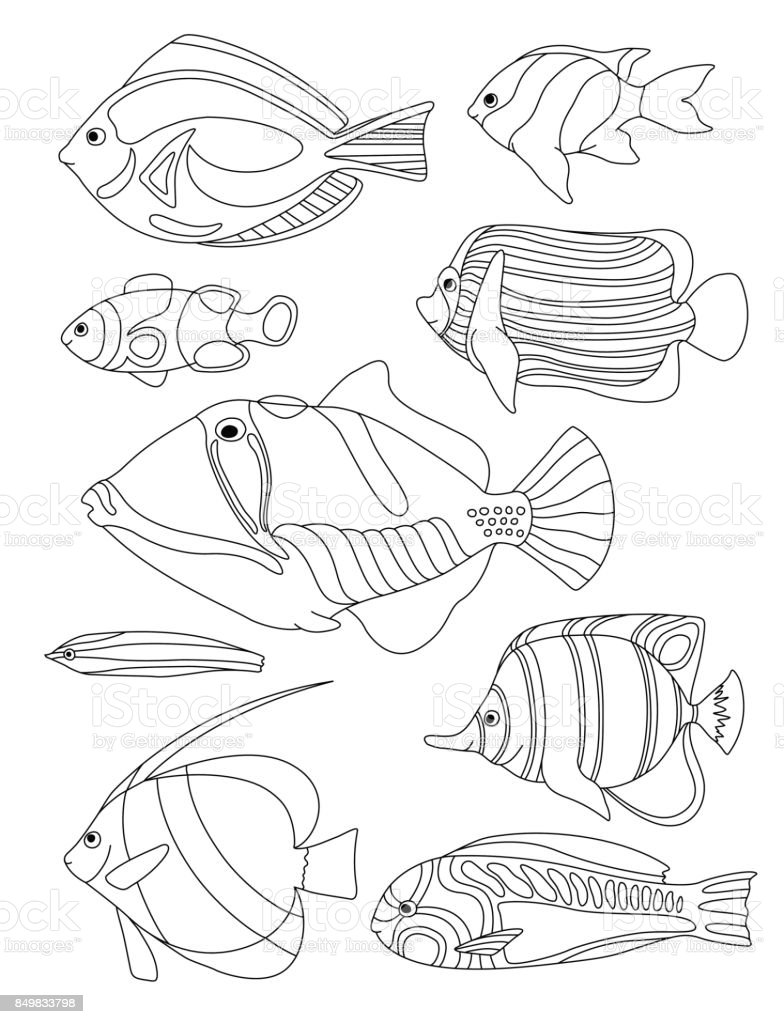 Outlined Coral Fishes Horizontal Coloring Page Tropical Fish Card Royalty Free