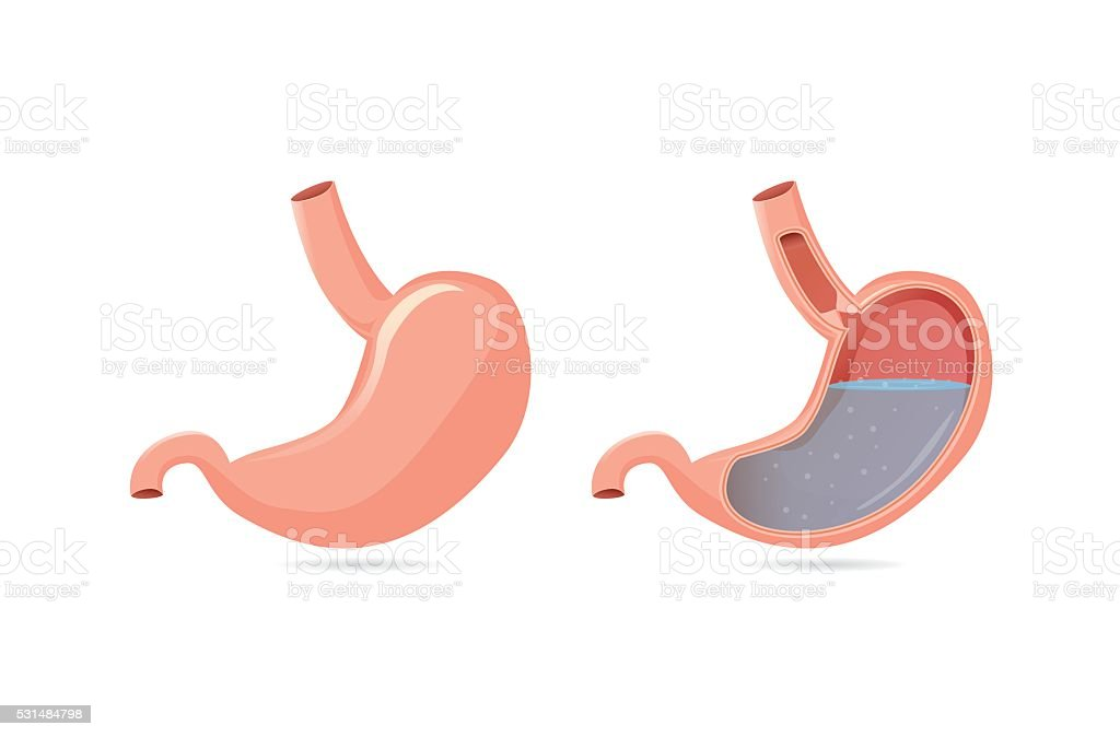 Outside of stomach and inside. vector art illustration