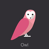 Owl, bird series