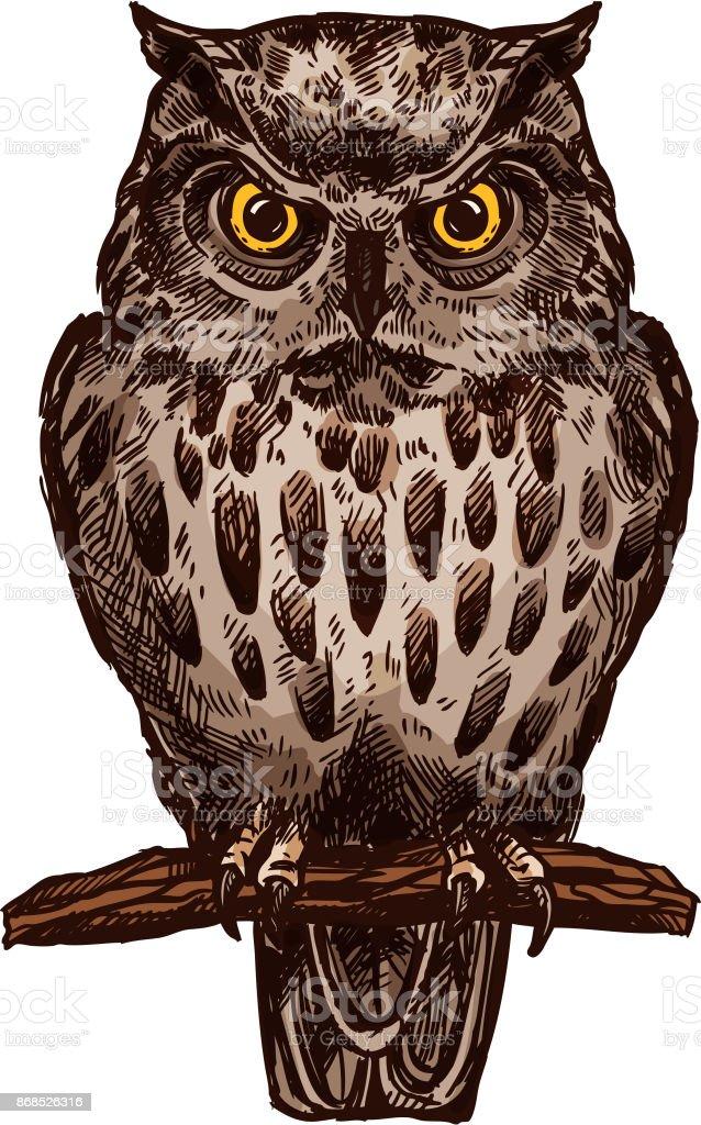 貓頭鷹鳥向量隔離草圖圖示向量藝術插圖