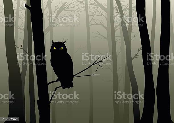 Owl in the misty woods vector id517382472?b=1&k=6&m=517382472&s=612x612&h=1fjecfjtrnczrsahf tku qjl hsmw5jaop7fmrvxhc=