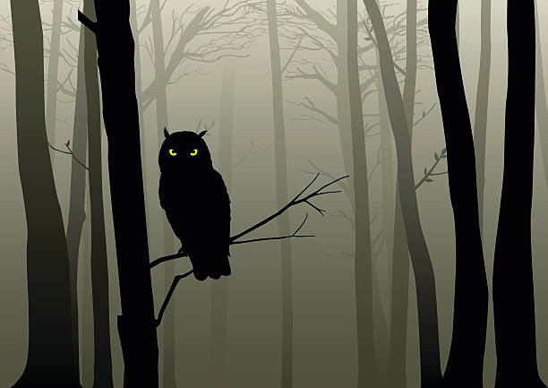 Owl In The Misty Woods Silhouette of an owl in the misty woods animal eye stock illustrations