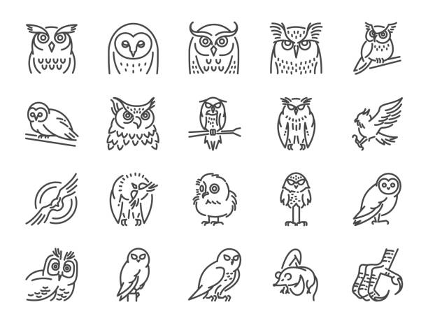 owl line icon set. included icons as bird, beak, claw, fly, hunt and more. - great horned owl stock illustrations, clip art, cartoons, & icons