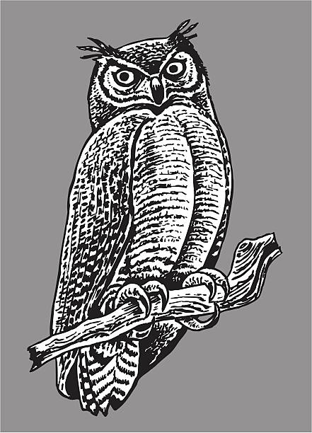 owl - nocturnal bird - black and white owl stock illustrations, clip art, cartoons, & icons