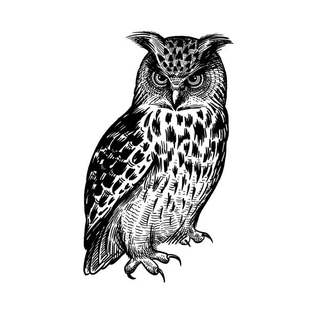 owl. predatory forest bird. sketch hand drawing. black and white. - sowa stock illustrations
