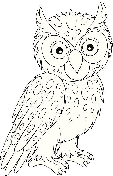 Best Black And White Owl Illustrations, Royalty-Free