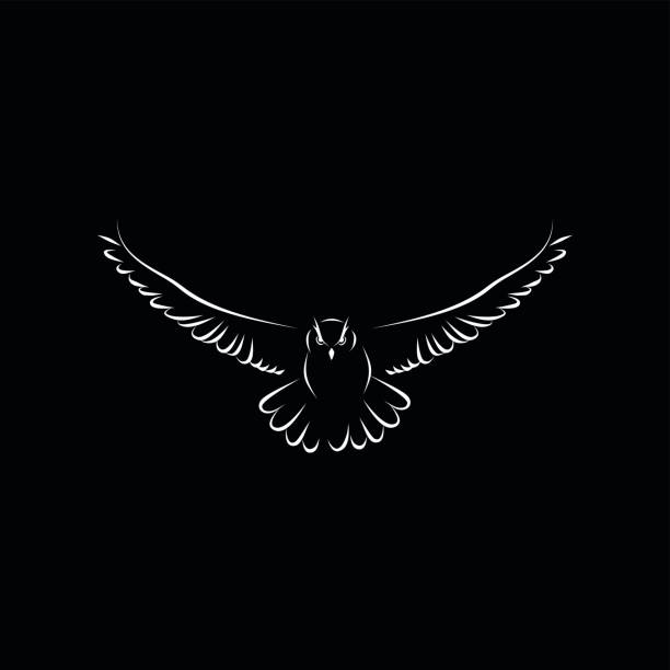 best owl flying illustrations, royalty-free vector