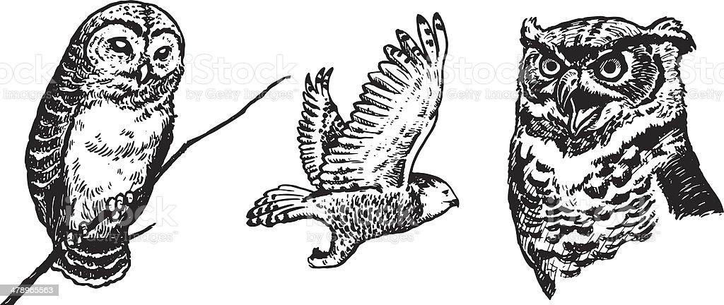 Owls Illustration向量藝術插圖